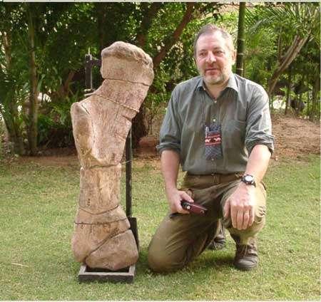 Les dinosaures ont atteint une taille gigantesque très tôt dans leur évolution, comme en témoigne cet humérus trouvé dans le Trias supérieur de Thaïlande (environ 210 millions d'années), qui a appartenu à un sauropode atteignant peut-être 15 mètres de longueur. L'auteur donne l'échelle… © DR