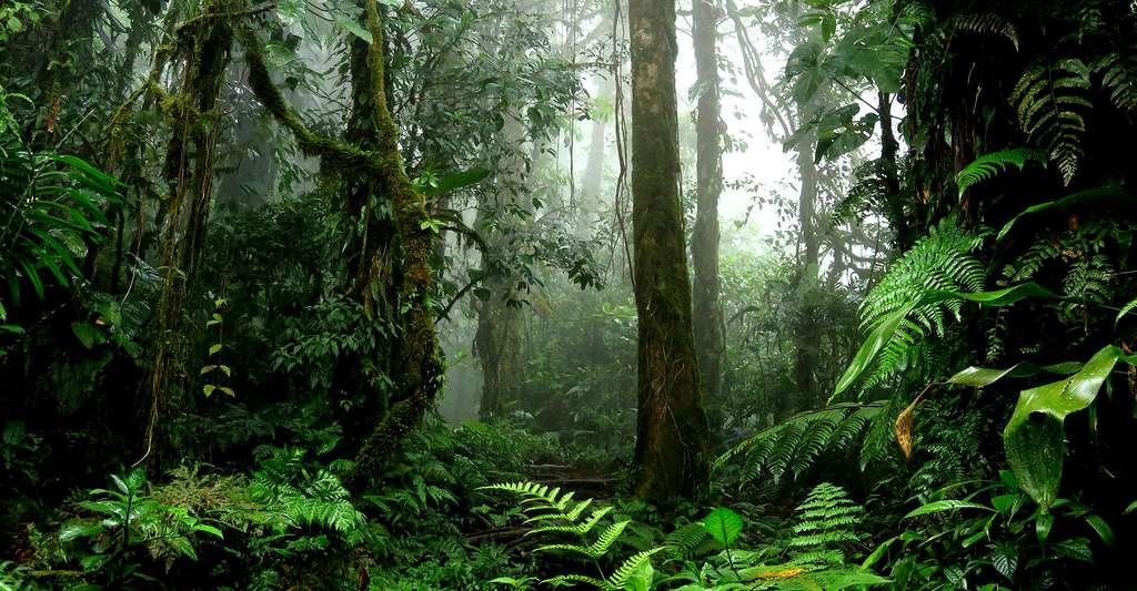 Vue de la forêt tropicale. © TravelStrategy, Fotolia