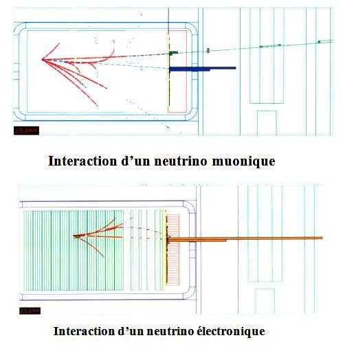 Cette figure montre des interactions de neutrinos respectivement électronique et muonique, clairement différenciés dans un détecteur précis utilisé au Cern et situé dans un faisceau de neutrinos produits à partir d'un accélérateur. © François Vannucci