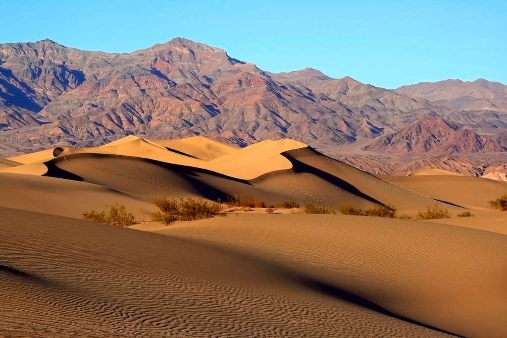 Les Mesquite Dunes (Prosopis glandulosa torreyana) dans la vallée de la Mort, passage obligé d'un voyage en Californie. © Brocken Inaglory - cc by nc 3.0