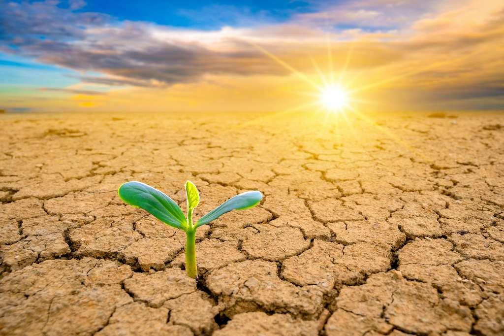 La disparition de la couche d'ozone entraînera la mort de la plupart des organismes vivants. © sarayut_sy, Adobe Stock