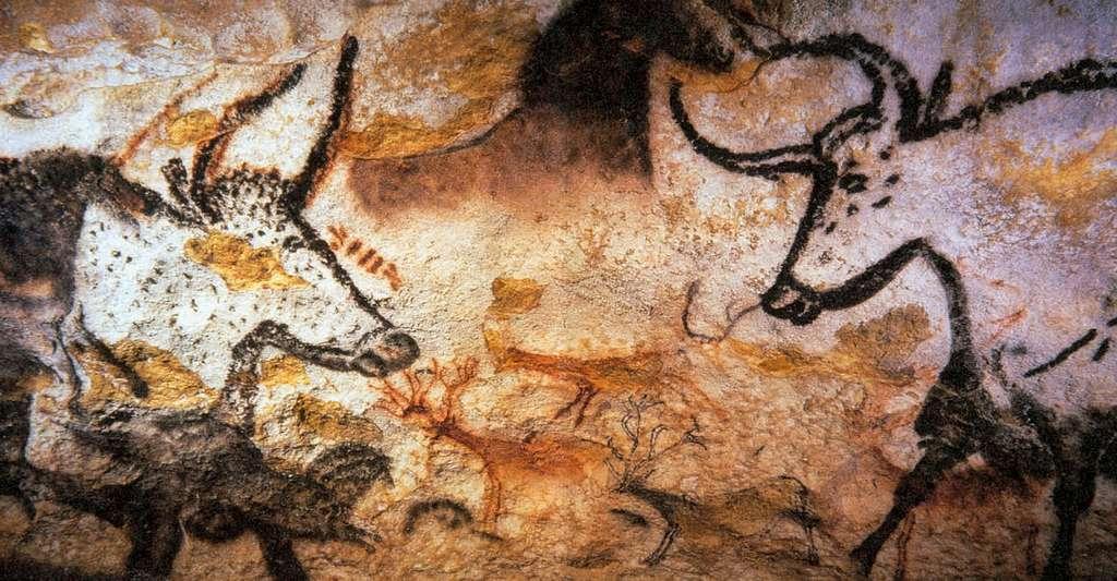 Les fresques de la grotte de Lascaux l'attestent : les bovins étaient déjà présents depuis longtemps à l'ouest du Massif central. © Prof Saxx, CC by-sa 3.0