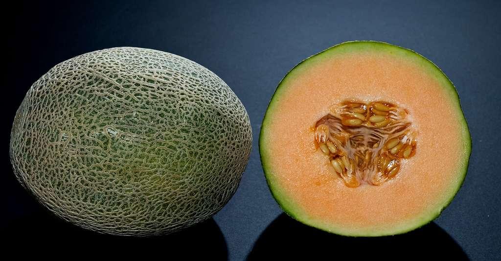 Vue en coupe du melon cantaloup. © Atomicbre, Wikimedia commons, CC by 3.0