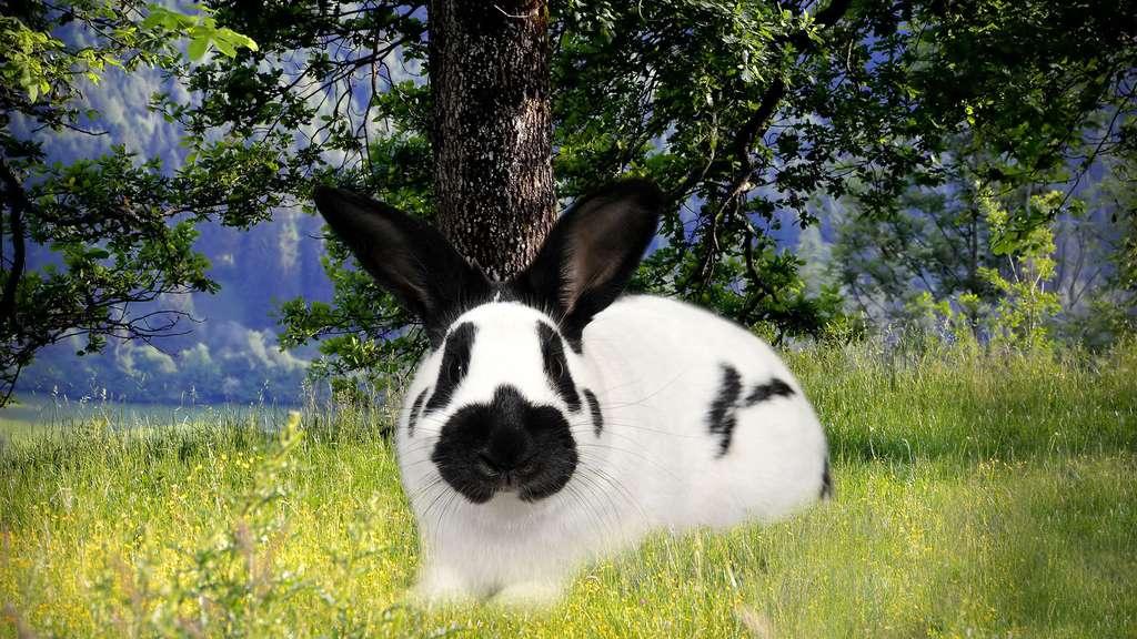 Un lapin à lunettes noires