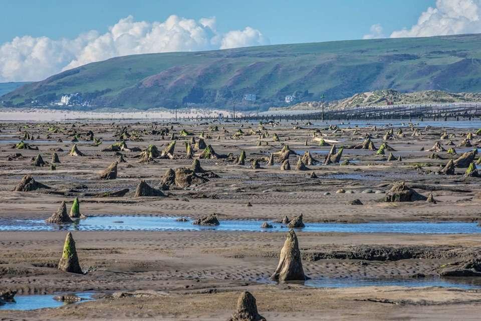 La forêt fossilisée couvre la plage entre les villages de Borth et d'Ynyslas. © Welsh photographs, Facebook