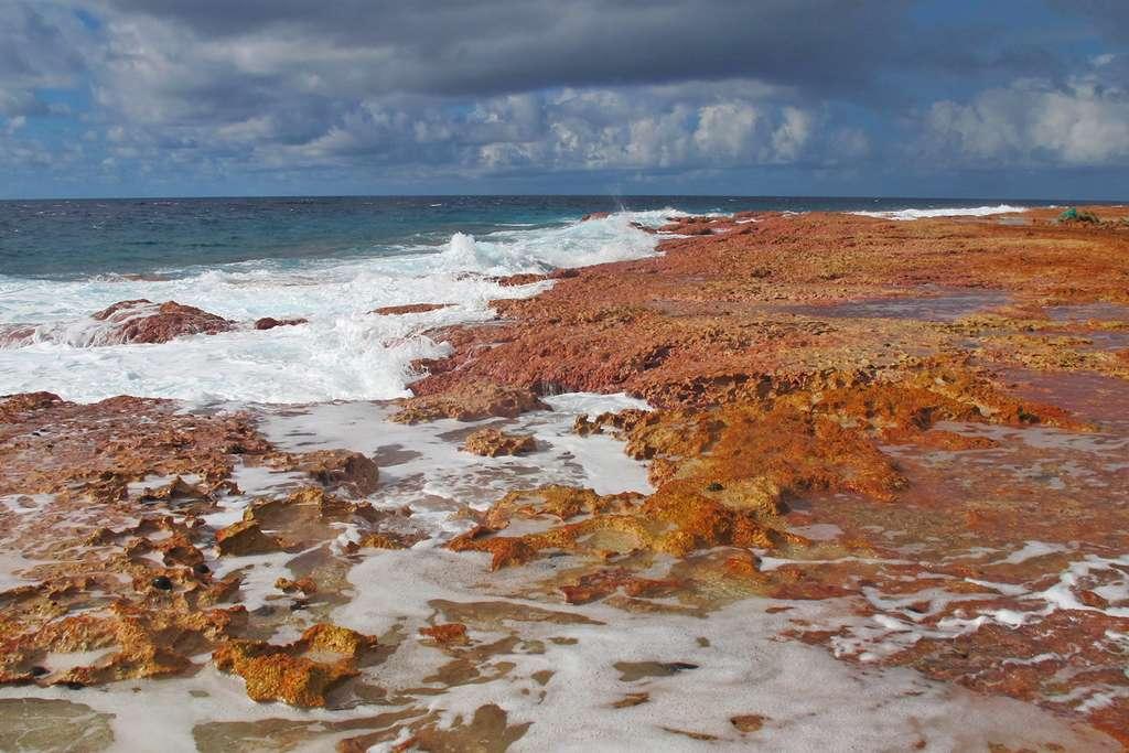 Récif de corail côté océan à Makemo