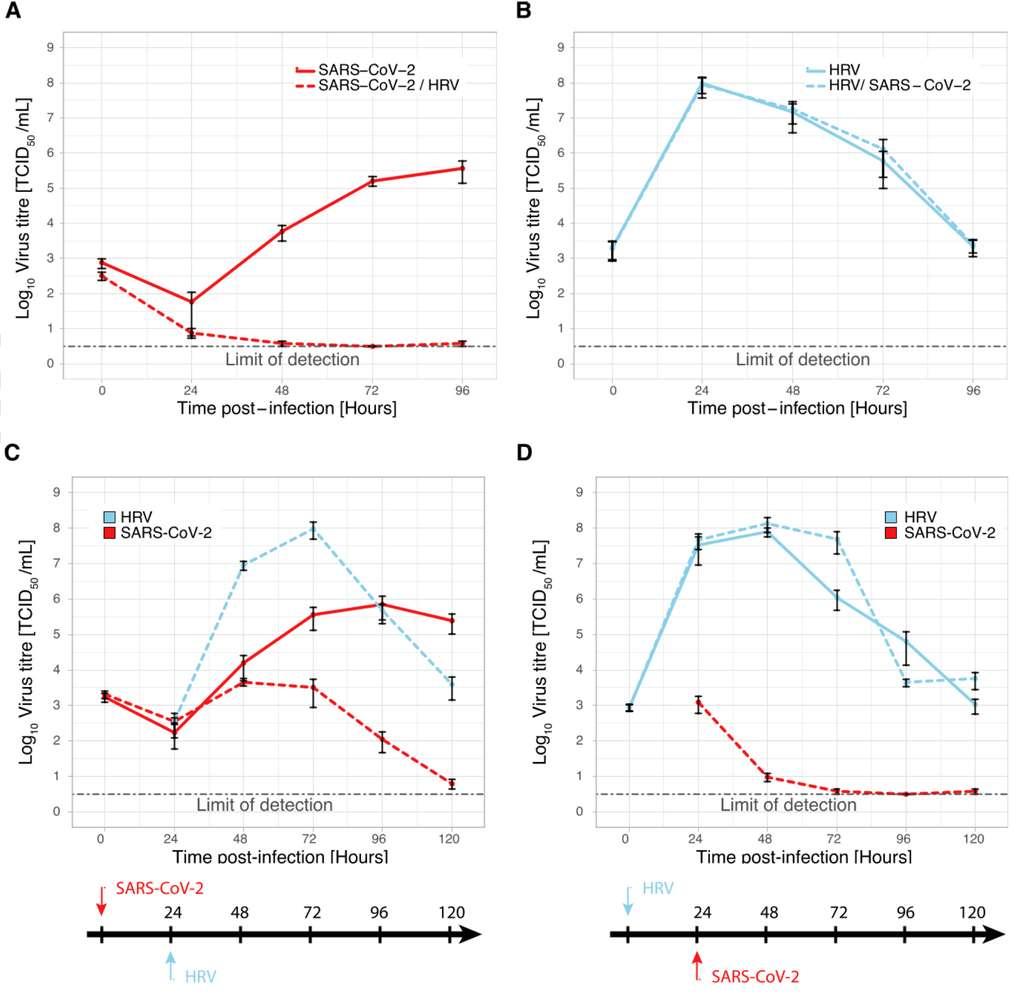 A. Le suivi du titre viral du SARS-CoV-2 seul (trait rouge) et en présence du HRV (trait rouge pointillé). B. Le suivi du titre viral du HRV seul (trait bleu) et en présence du SARS-CoV-2 (trait bleu pointillé). C. Le suivi des titres viraux du SARS-CoV-2 et du HRV-16 lorsque le SARS-CoV-2 est présent en premier. D. Le suivi des titres viraux du HRV-16 et du SARS-CoV-2 lorsque le HRV-16 est présent en premier. © Dee, K et al., Journal of Infectious Diseases