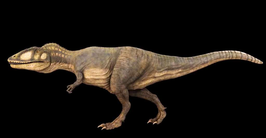 Carcharodontosaurus. © Julian Johnson, CC BY 3.0
