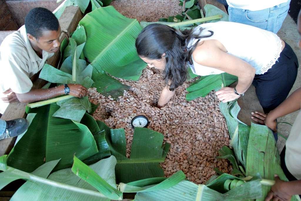 Fermentation des graines de cacao (fèves) en caisses. © S. Bonnat
