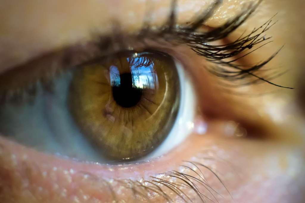 Comment notre œil perçoit-il l'information visuelle ? © scaliger, Fotolia
