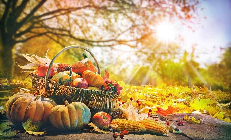 Fruits et légumes d'automne à cueillir ou ramasser. © Alexander Raths, Adobe Stock
