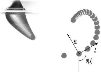 Simulation de la trajectoire d'une « balle flottante » à l'aide d'une sphère de 3,5 mm pénétrant dans l'eau à 35 m/s (126 km/h), avec une rotation sur elle-même (1.200 radians par seconde) et suivie par chronophotographie. À gauche, elle franchit la surface ; la série d'images de droite montre la trajectoire en spirale, avec la variation de la courbure indiquée en θ/s. Les lettres « n » et « t » correspondent au repère de Serret-Frenet, utilisé pour l'étude d'un objet en mouvement. L'expérience a été réalisée par une équipe du LadHyX (École polytechnique, Palaiseau, France) et décrite dans cet article. © Guillaume Dupeux, Anne Le Goff, David Quéré et Christophe Clanet, New Journal of Physics