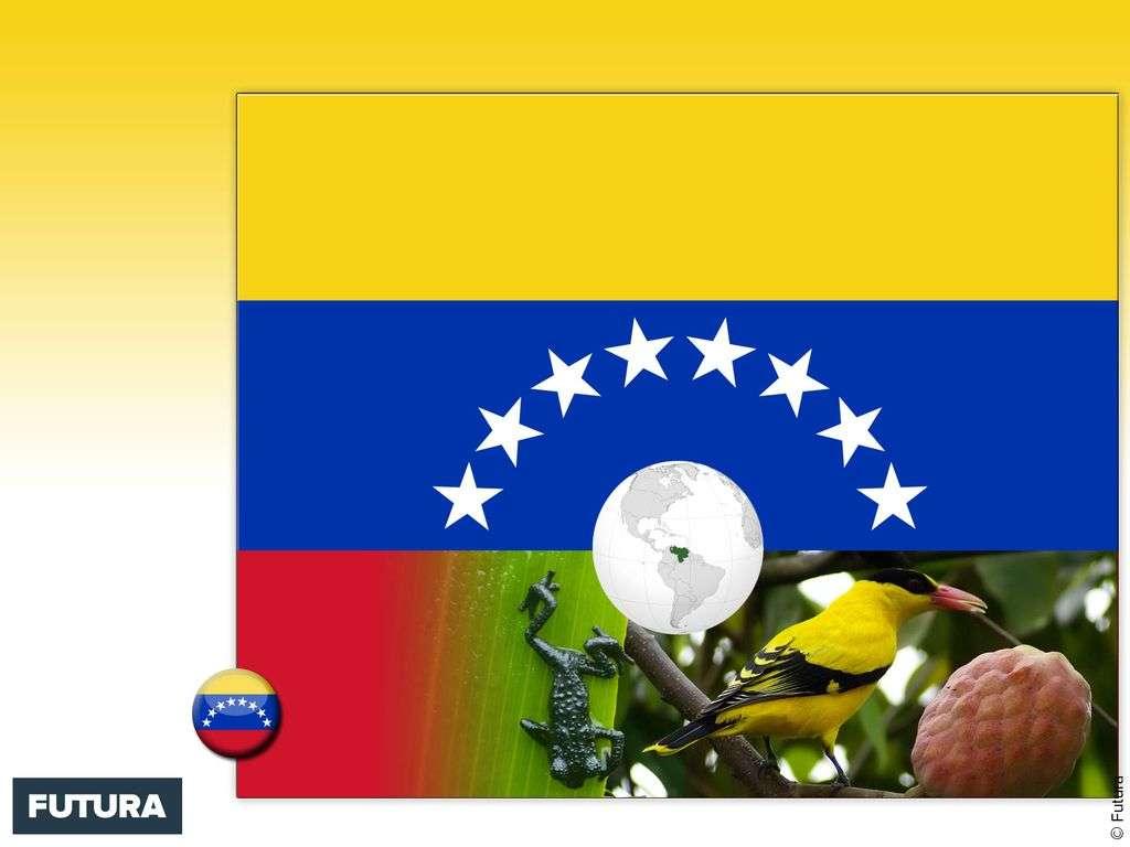Drapeau : Vénézuela