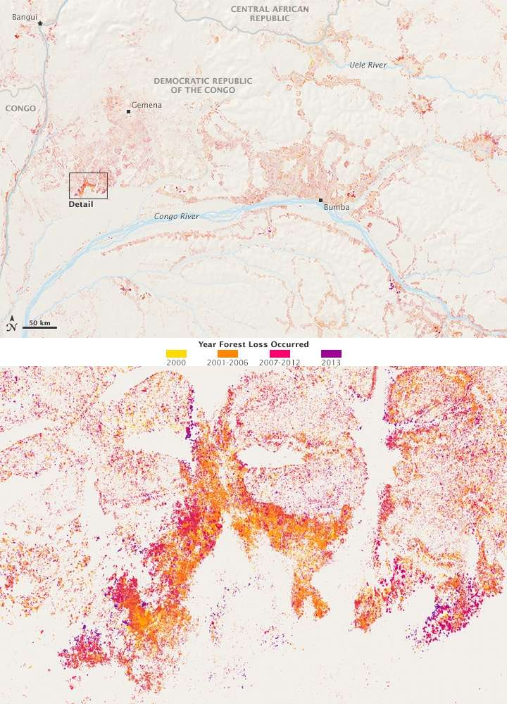 Image du haut : évolution du couvert forestier dans la seule région de République démocratique du Congo (RDC). En bas, agrandissement du détail encadré dans l'image au-dessus. Les cartes ont été créées à partir des données collectées entre 2000 et 2013 et indiquent, selon la couleur, la période où des changements sont intervenus sur les forêts. © Joshua Stevens (Nasa Earth Observatory), Global Forest Change, Hansen et al., UMD