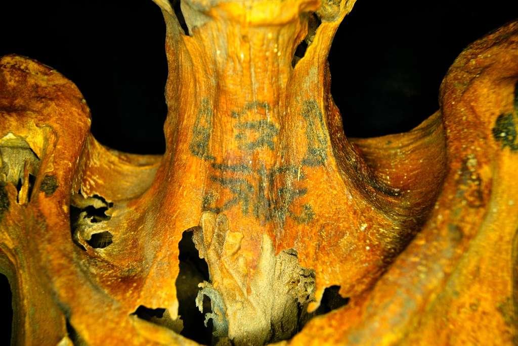 Vingt-trois tatouages ont été examinés sur cette momie découverte en 2014 et à laquelle il manquait les jambes. © Anne Austin