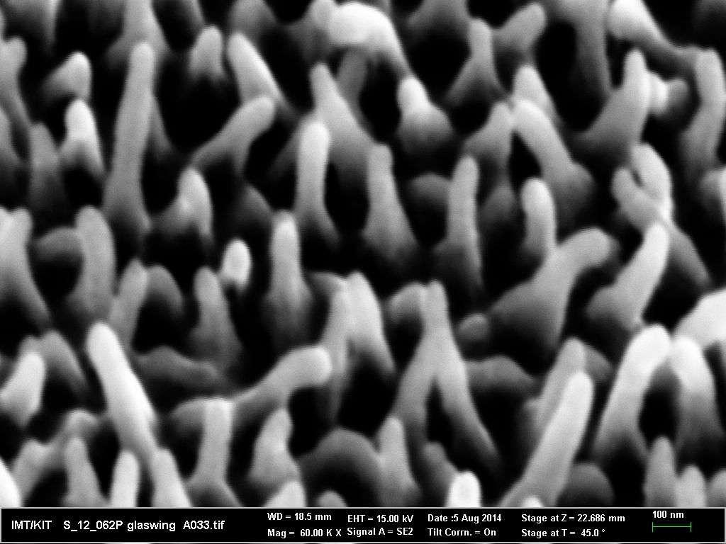 L'aile du Greta Oto possède des nanostructures de différentes tailles, distribuées de manière irrégulière. Cette particularité permet une faible réflexion de la lumière, quel que soit l'angle sous lequel l'aile est regardée. © Hasan Radwanul Siddique, KIT