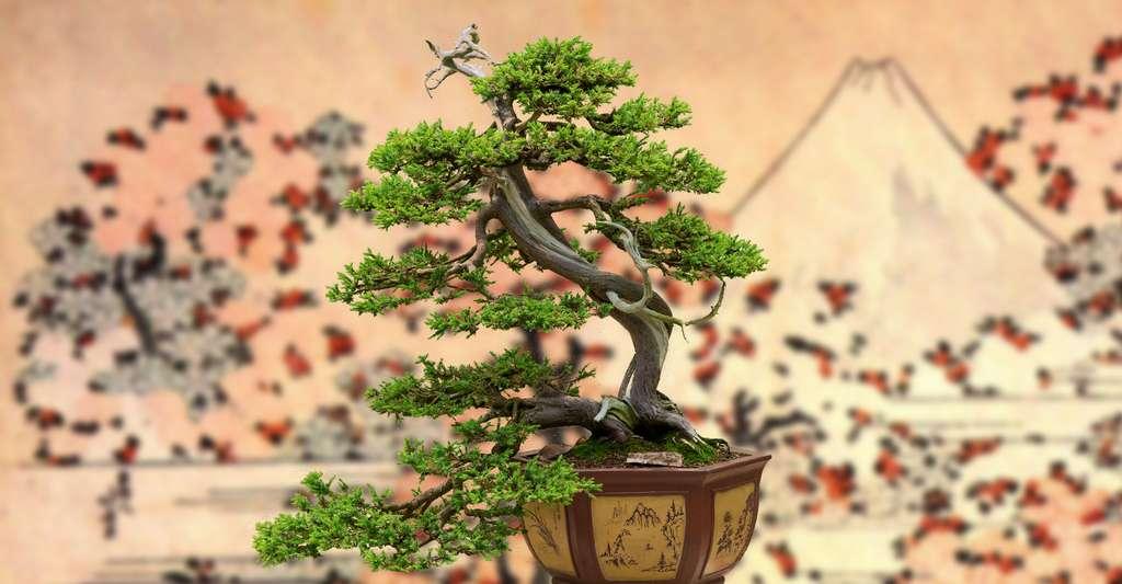 Comment bien choisir son bonsaï ? © Daniel Gasienica, CC by-nc 2.0