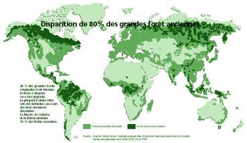 Disparition de 80% des grandes forêts anciennes