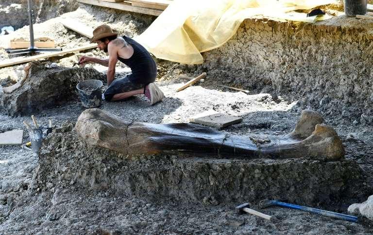 Un paléontologue du Muséum national d'histoire naturelle de Paris examine un pelvis, à côté du fémur de sauropode, sur le site d'Angeac-Charente, le 24 juillet 2019. © Georges Gobet, AFP