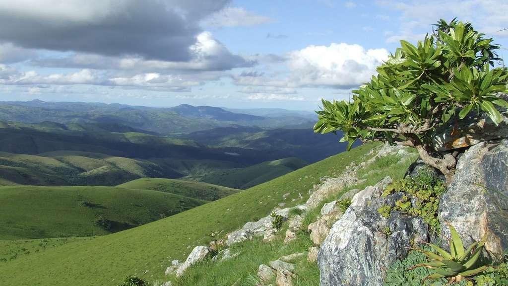 Afrique du Sud : les montagnes de Barberton Makhonjwa