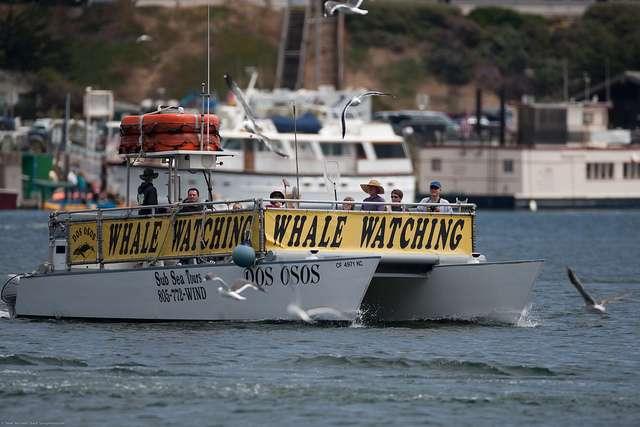 Le whale-watching, une activité à réglementer. © Mike Baird, Flickr, CC by 2.0