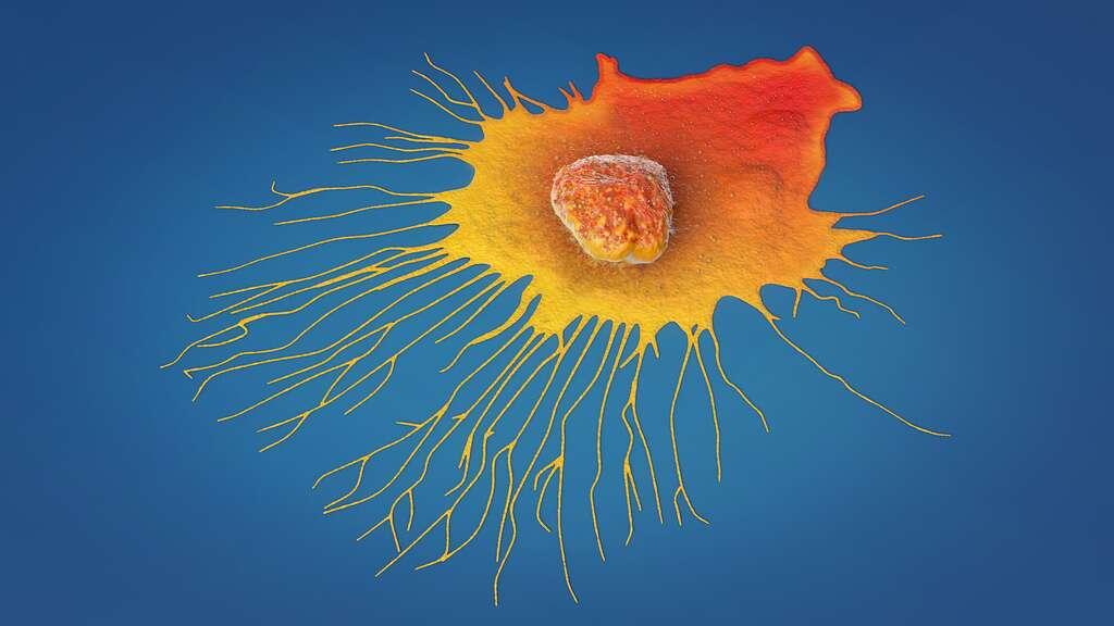 Quelles sont les pistes de développement pour le traitement des cancers ? © Christoph Burgstedt, Adobe Stock