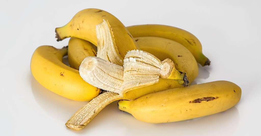 La banane qui nous achetons généralement au supermarché est un fruit cultivé parthénocarpique, c'est à dire, sans graines dans la chair. © stevepb, Pixabay, CC0 Creative Commons