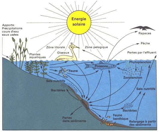 Lac Léman un écosystème.