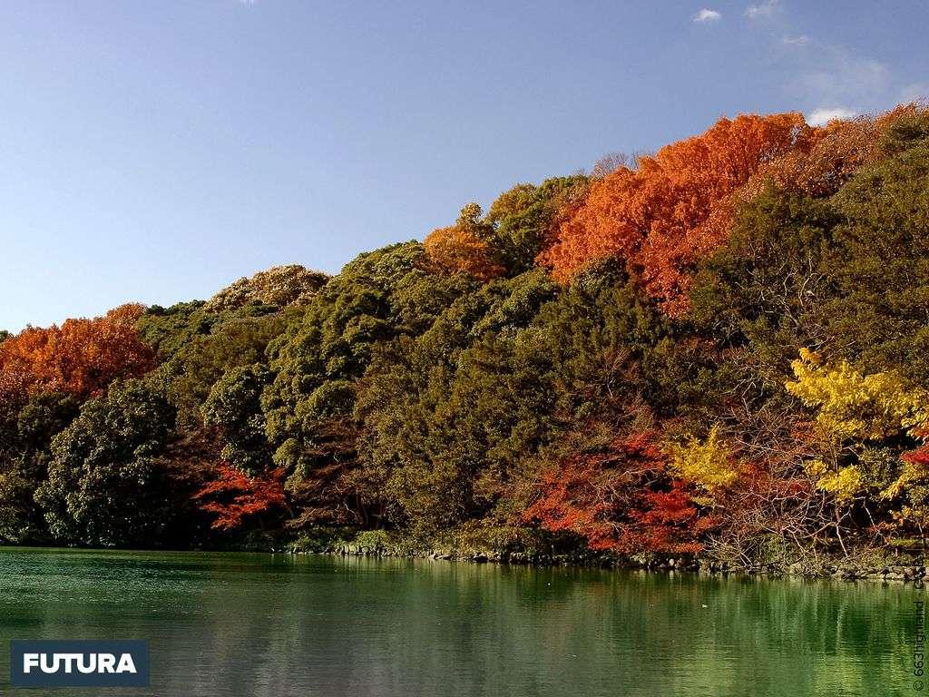 Forêt dans le Akashi Park - Japon