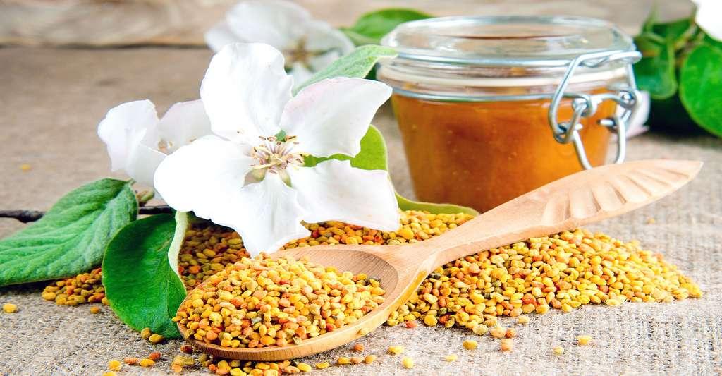 Les grains de pollen sont des compléments alimentaires naturels. © Nata-lunata, Shutterstock