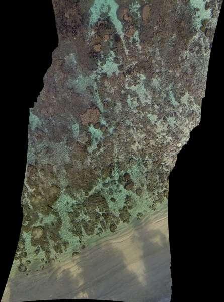 L'une des premières images prises par le drone au large de l'île Ofu, dans les Samoa américaines. © Université Stanford