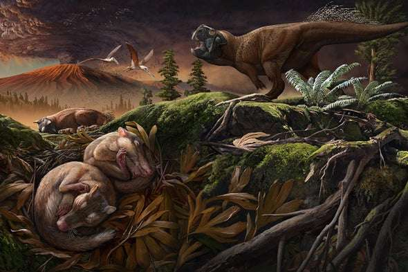 Une reproduction de l'environnement et de l'espèce protomammifère Origolestes lii. © Chuang Zhao