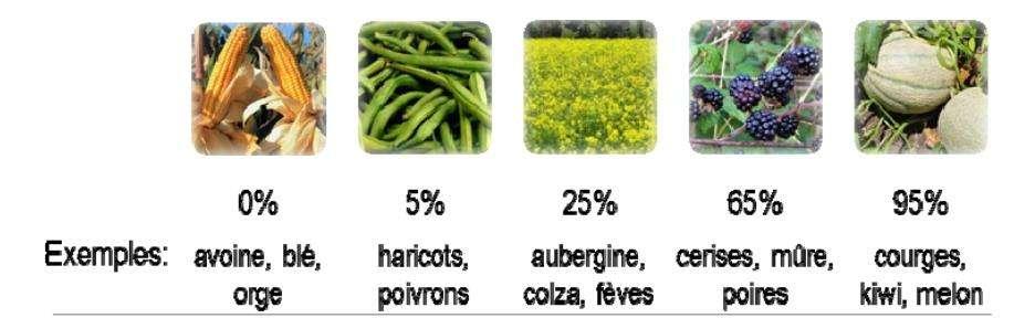 Le niveau de dépendance des cultures aux pollinisateurs repose sur le pourcentage de diminution du rendement dû à une absence de pollinisateurs : 0 % (0 % de diminution de rendement), 5 % (moins de 10 % de diminution de rendement), 25 % (10 à 39 % de diminution de rendement), 65 % (40 à 90 % de diminution de rendement), et 95 % (plus de 90 % de diminution de rendement). © CNRS