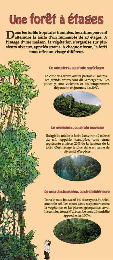 Mieux comprendre les forêts tropicales.