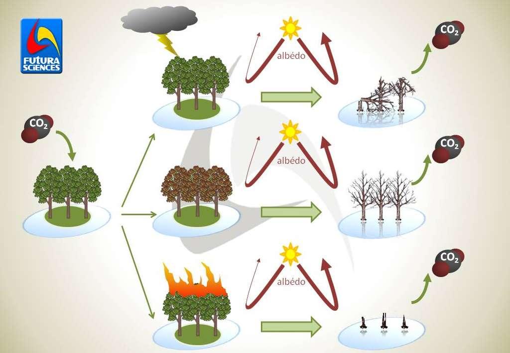 Lors des trois catastrophes naturelles étudiées (orage, attaque d'insecte parasite et incendie), l'affaiblissement de la séquestration du carbone est compensé par un effet albédo renforcé. © Bruno Scala/Futura-Sciences