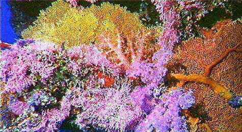 Vue sous-marine de la Grande Barrière de Corail. Crédit: la Great Barrier Reef Marine Park Authority
