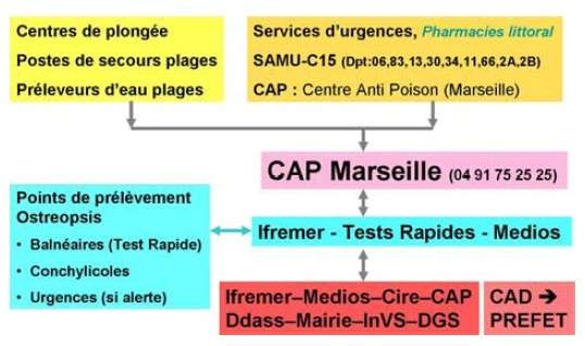 Le réseau de surveillance et de prévention Ostreopsis en 2009. © Accord RAMOGE