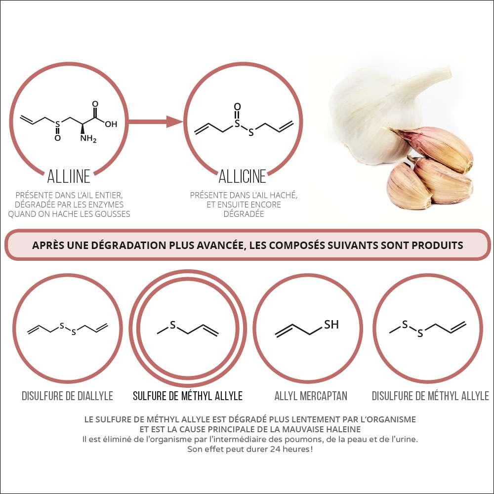 Les composés impliqués dans la mauvaise haleine quand on mange de l'ail. © PPUR