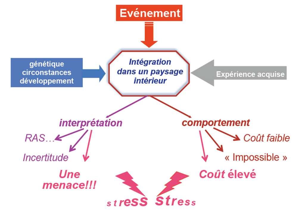 L'expérience acquise au cours de la vie, les évènements et les circonstances génétiques sont intégrés, puis interprétés au niveau cognitif et comportemental. © DR
