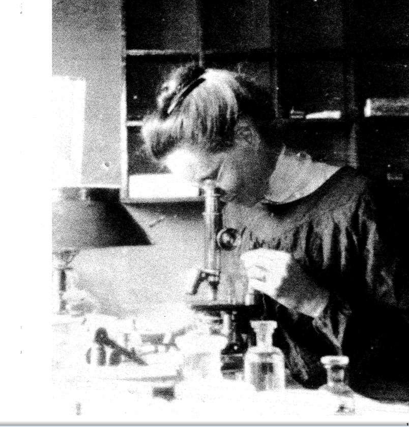 Nettie Stevens, cytologiste, au travail (date inconnue). © Université de Stanford