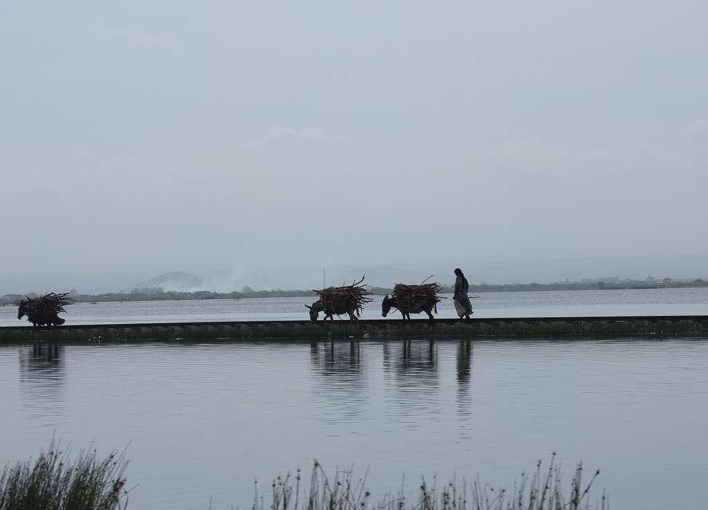 La rivière Awash s'écoule dans la dépression de l'Afar pour finalement se jeter dans le lac Abbe, dont le niveau reste constant grâce à l'évaporation. © dalager, Flickr, cc by nc 2.0