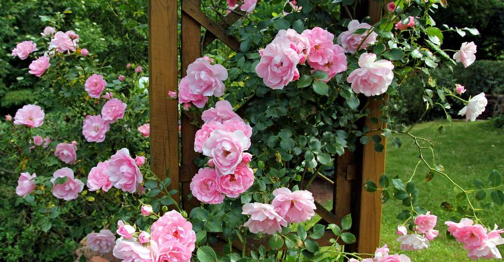 Bien choisir les plantes de son jardin : fleurs vivaces ...