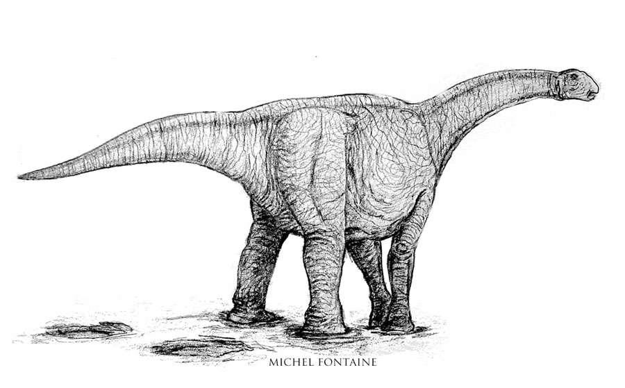 Atlasaurus bébé