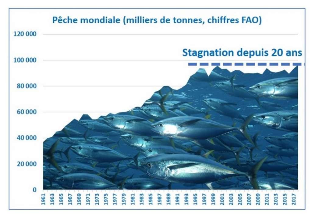 On a déclaré autant de prise de poisson en 2018 qu'en 1998, alors que les méthodes de pêche sont devenues nettement plus agressives. S'il y avait beaucoup de poissons dans la mer, cette courbe aurait continué à croître. © Bruno Parmentier (graphique de l'auteur à partir des chiffres FAO)