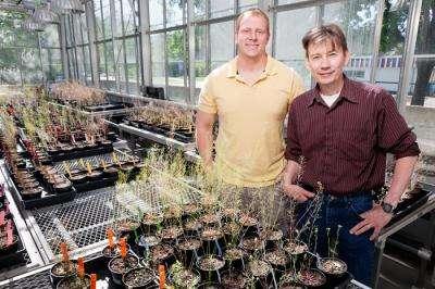 Les deux biologistes Ken Paige et Daniel Scholes devant leurs plants tests d'Arabidopsis thaliana au cours de leur étude. © L. Brian Stauffer