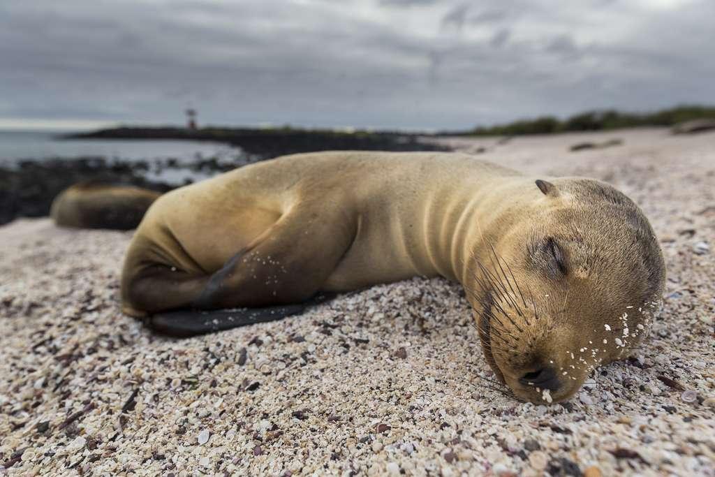 Ici on cohabite avec les animaux, comme ces otaries qui partagent la plage avec les humains. © Maxime Aliaga, tous droits réservés