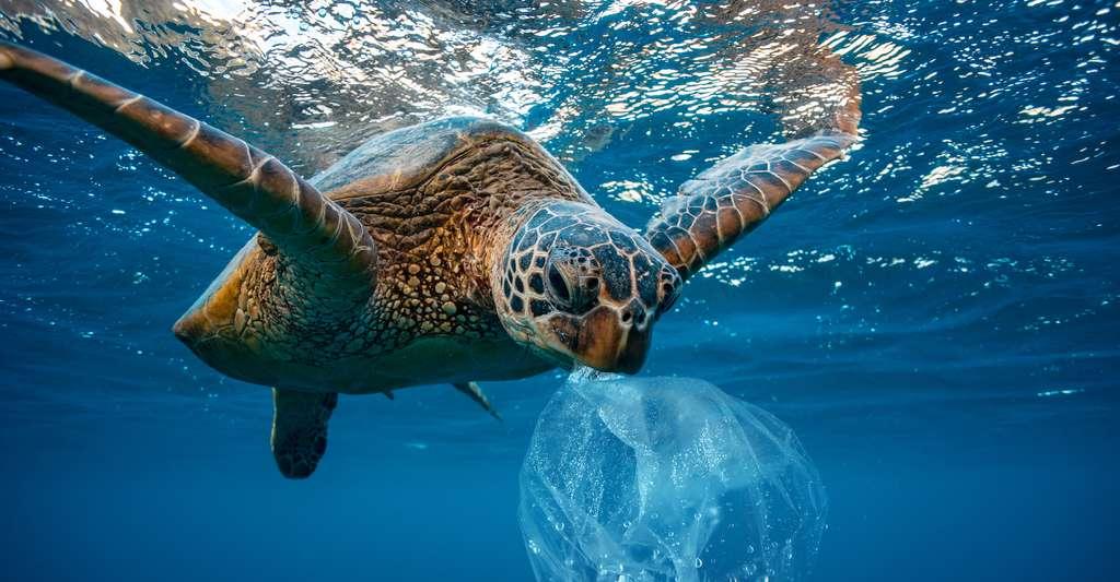 Bien que biodégradable, un déchet plastique pourrait rester suffisamment longtemps dans la nature pour être ingéré par un animal et porter atteinte à sa santé. © willyam, Adobe Stock