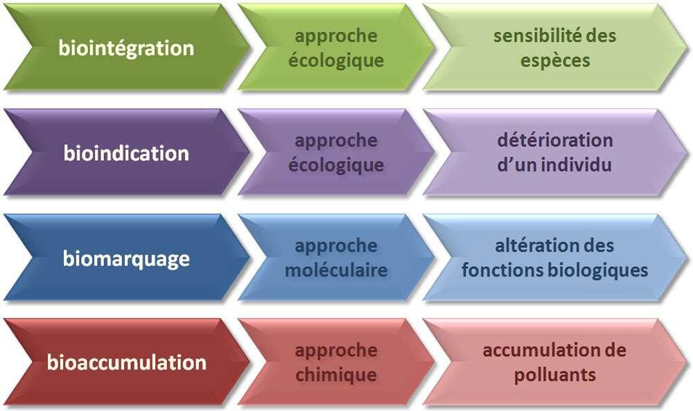 Les différentes approches de biosurveillance selon l'échelle d'étude. © Yannick Agnan - Tous droits réservés
