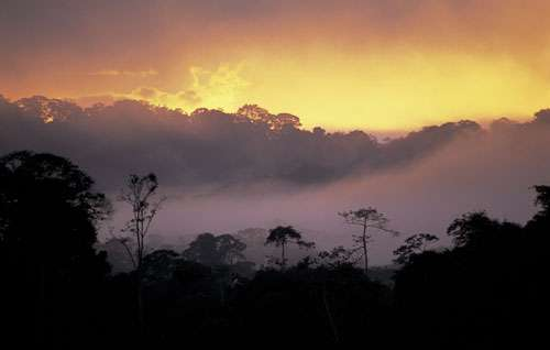 Misty sunset on the Amazonian forests along the Tambopata river. French Guiana © WWF-Canon / Roger LeGUEN