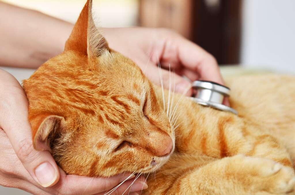 Si votre animal ingère une substance toxique, ne cherchez pas de remède de grand-mère et ne perdez pas de temps. Appelez votre vétérinaire et pour obtenir les meilleurs conseils, indiquez-lui quel produit est en cause, quelle quantité a été ingérée et à quelle heure. © Jjimage, Adobe Stock